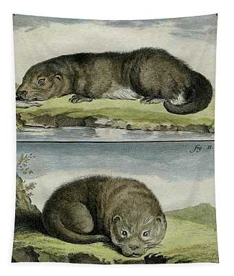 Otters - 1780 Engraving By Wildlife Artist De Seve For French Naturalist Comte De Buffon - 1 Tapestry