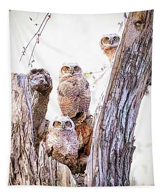 Owl Trio Standing Guard Tapestry