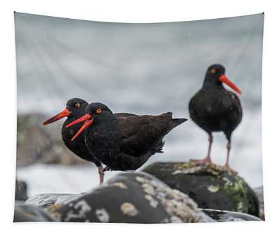 Oystercatchers In The Rain Tapestry