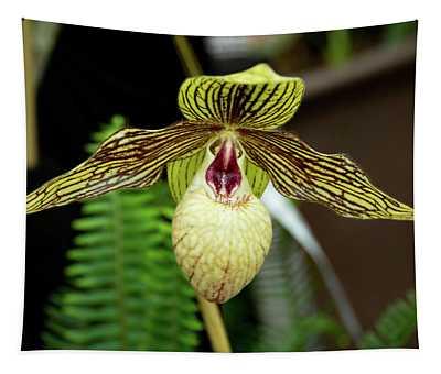 Paph. Harold Koopowitz Orchid Tapestry