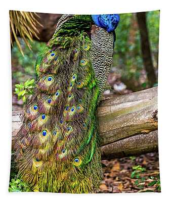 Peacock Watching Tapestry