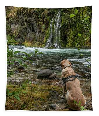 Photo Dog Jackson Contemplating His Next Photograph  Tapestry