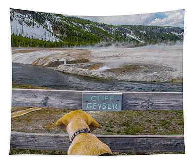 Photo Dog Jackson Watches The Cliff Geyser Tapestry