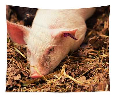 Piglet Tapestry