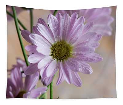 Pink Daisies-5 Tapestry