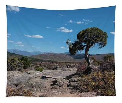 Pinyon Pine With North Rim In Background Black Canyon Of The Gunnison Tapestry