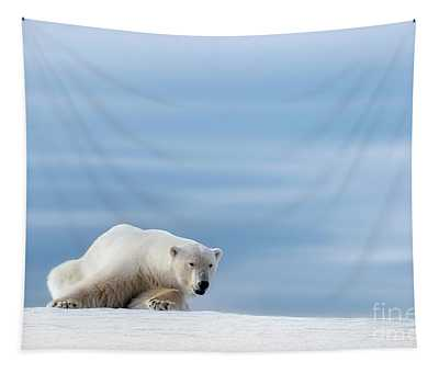 Polar Bear Crouching On The Frozen Snow Of Svalbard Tapestry