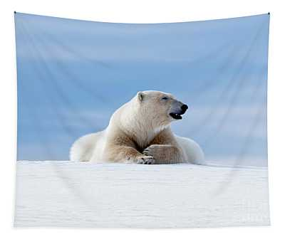 Polar Bear Laying On The Frozon Snow Of Svalbard Tapestry
