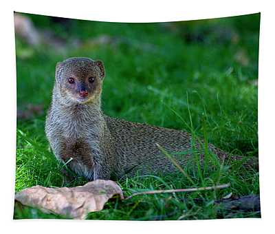 Portrait Of A Mongoose Tapestry