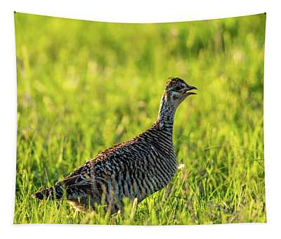 Prairie Chicken Hen Tapestry