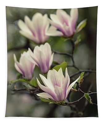 Tapestry featuring the photograph Pretty White And Pink Magnolia by Jaroslaw Blaminsky
