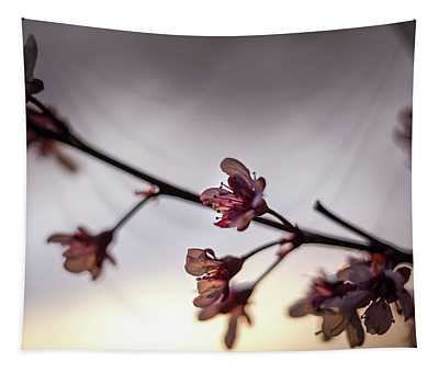 Purpleleaf Sand Cherry At Sunset Tapestry