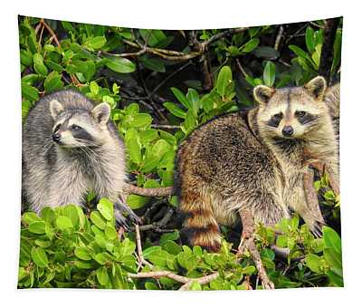 Raccoons In The Mangroves Tapestry