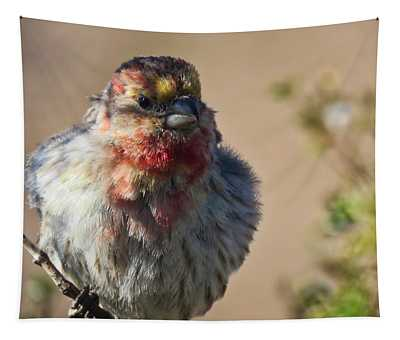 Rare Multicolored Male House Finch Tapestry