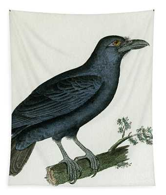 Raven Or Crow, 1830 Tinted Engraving For Complete Works Of French Naturalist Comte De Buffon - 3 Tapestry