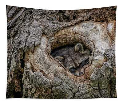 Raccoon Photographs Wall Tapestries