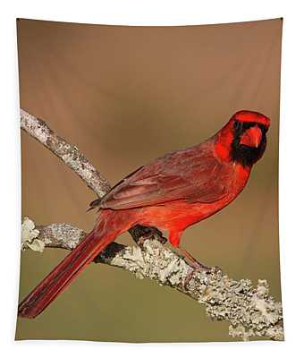 Red And Radiant Tapestry