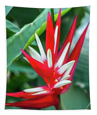 Red And White Birds Of Paradise Tapestry