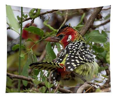 Red-and-yellow Barbet Tapestry