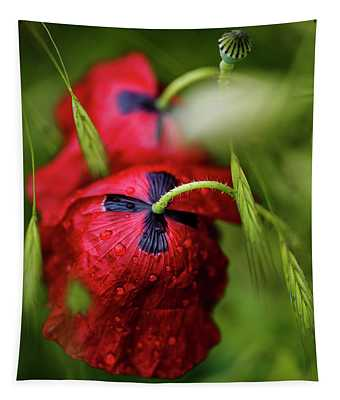 Red Corn Poppy Flowers With Dew Drops Tapestry