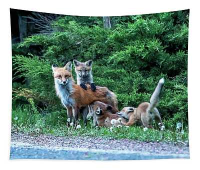 Red Fox Family Tapestry