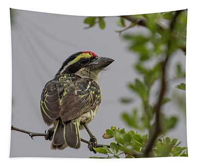Red-fronted Barbet Tapestry