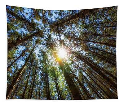 Red Pines 2 Tapestry