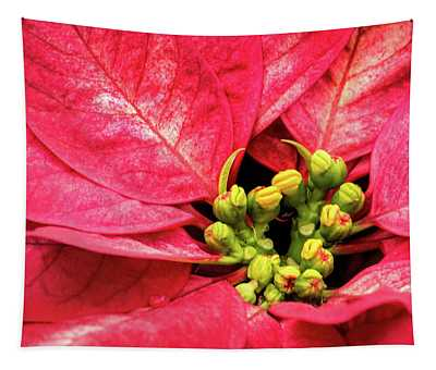 Red Poinsettia Tapestry
