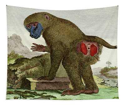 Baboon, 1780 Tinted Engraving By Wildlife Artist De Seve For Naturalist Comte De Buffon - 2 Tapestry