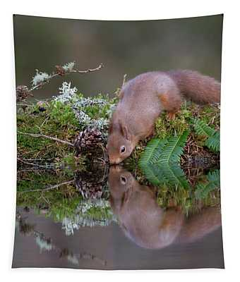 Red Squirrel Drinks From A Woodland Pool Tapestry