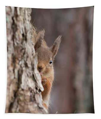 Red Squirrel Peering Round A Tree Tapestry