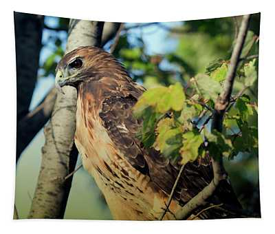 Red-tailed Hawk Looking Down From Tree Tapestry