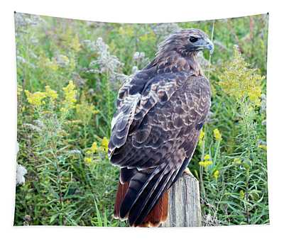 Red-tailed Hawk On Fence Post Tapestry