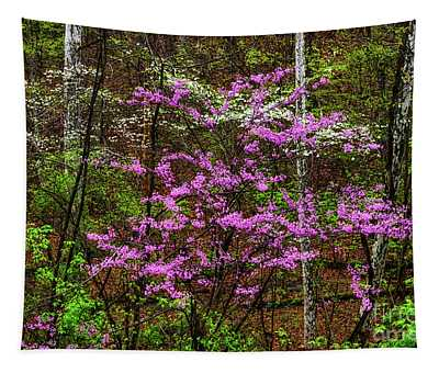 Redbud Dogwood And Sycamore Tapestry