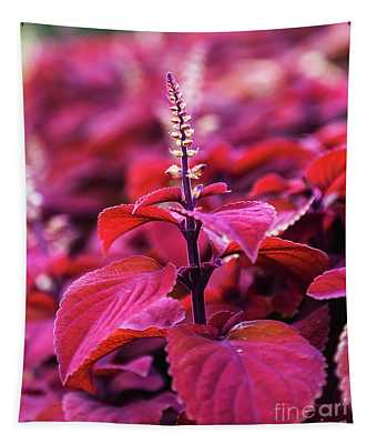 Reds Tapestry