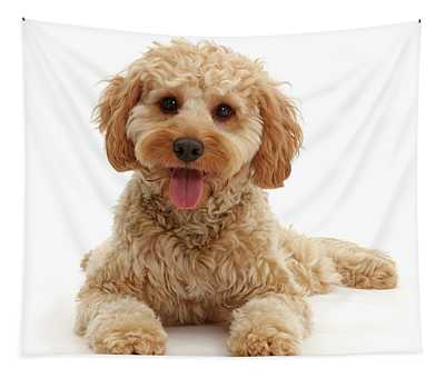 Relaxing Cavapoo Tapestry