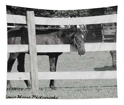 Resting Horse Tapestry