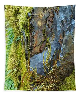 Rock, Moss, And Ferns Tapestry