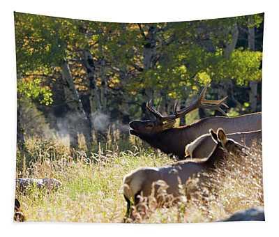 Rocky Mountain Bull Elk Bugeling Tapestry