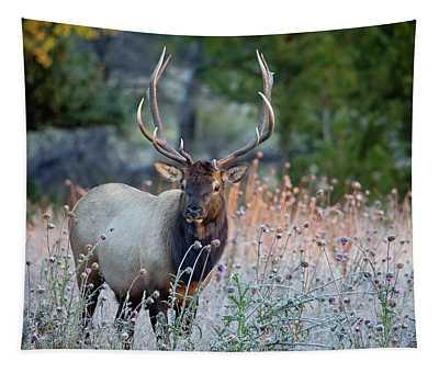 Rocky Mountain Wildlife Bull Elk Sunrise Tapestry