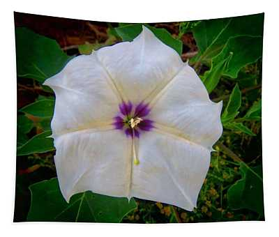 Tapestry featuring the photograph Sacred Datura - Full Bloom by Judy Kennedy