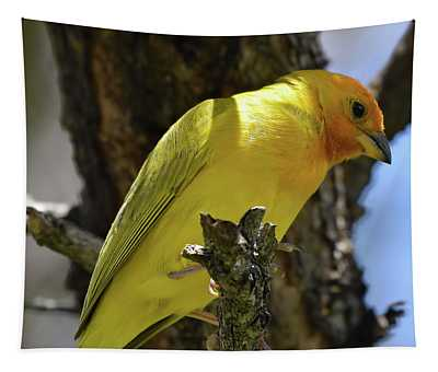 Saffron Finch Tapestry