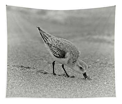 Sanderling Foraging For Food Tapestry