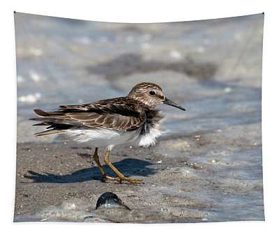Sandpiper At Tidal Pool Tapestry