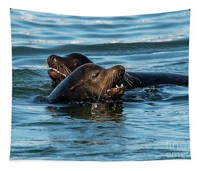Pinniped Tapestries