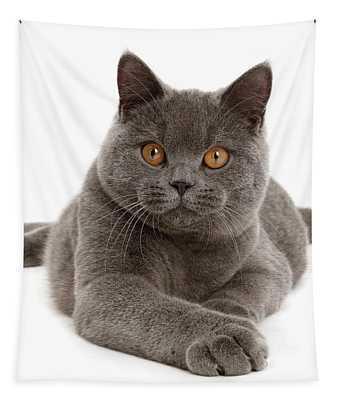 Serious Grey Cat Tapestry