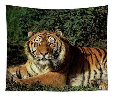 Siberian Tiger Endangered Species Wildlife Rescue Tapestry