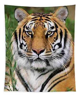 Siberian Tiger Staring Endangered Species Wildlife Rescue Tapestry