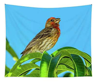 Singing House Finch Tapestry