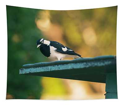 Small Magpie Lark Outside In The Afternoon Tapestry